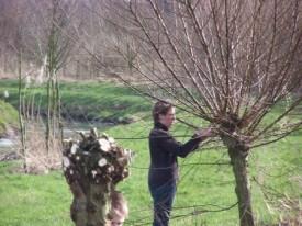 Kopfbaumschnitt (Foto: B. Heitmann)