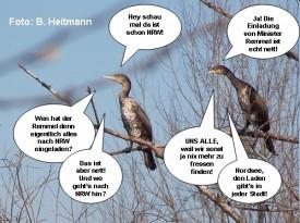 Vögeln in den Mund geschoben... (Bild: B. Heitmann)