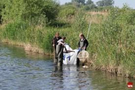 Helfer sammeln tote Fische in den Rieselfeldern ein (Foto: Westfälische Nachrichten)