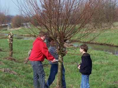 Kopfbäume bieten Baumaterial © Heitmann