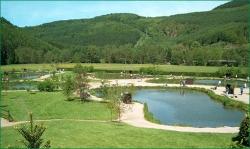 Teichanlage Fischzucht Rameil Foto: Rameil