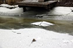Dinkel: Strukturen am Grund zeichnen sich im Eis ab.
