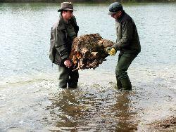 Große Baumwurzeln geignen sich besonders gut als Strömungsbrecher.